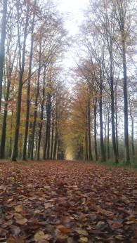 Chemin du Reiki_Exploring